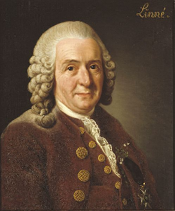 Carl Linnaeus bigraphy, stories - botanist and physician
